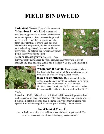 Pests in Gardens and Landscapes