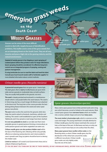 WEEDY GRASSES - Shellharbour City Council