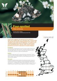 Four-spotted - Butterfly Conservation