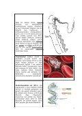 grup adaptasyon proje raporu.pdf - Page 7