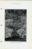 September-October 1947 - North American Rock Garden Society - Page 5