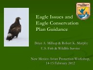 Eagle Issues and Eagle Conservation Plan Guidance - New Mexico ...
