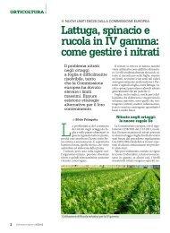 Lattuga, spinacio, rucola IV gamma 1306K - Provincia di Bergamo