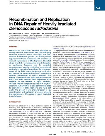 Recombination and Replication in DNA Repair ... - Miroslav Radman