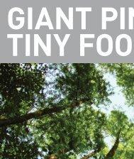 Giant Pines, Tiny Footprints - DelGro