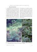 Nasa weigendii (Loasaceae: Loasoideae), una nueva especie del ... - Page 5