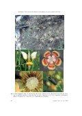 Nasa weigendii (Loasaceae: Loasoideae), una nueva especie del ... - Page 6