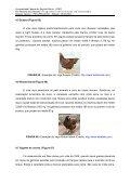 Produção de Frango de Corte - CEUNES - Universidade Federal do ... - Page 6