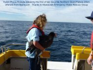 Karen Pryce-Howells releasing the first of two Juvenile Northern ...