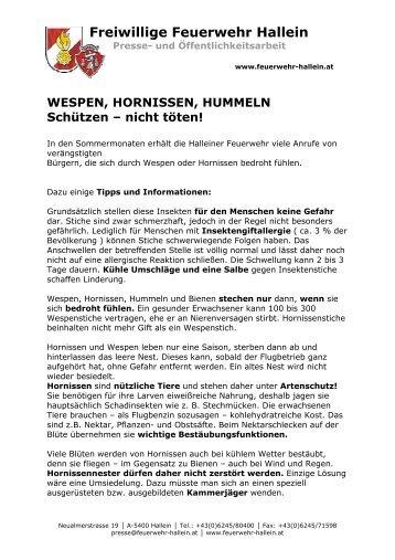 Info f. Schaukasten _Wespen - bei der Freiwilligen Feuerwehr Hallein