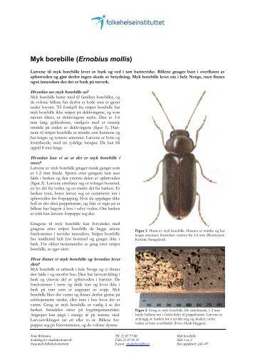 Myk borebille - Nasjonalt folkehelseinstitutt