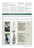 Achtung Wildkatze! - Vorarlberger Jägerschaft - Page 2
