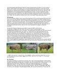 Ruhige Tiere verkaufen sich besser [304 KB] - Page 3