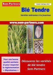 Découvrez les variétés de blé tendre Sem-Partners