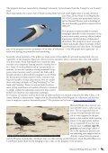 February 2013 - Illawarra Birders - Page 7