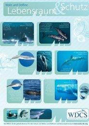Infomaterial: Delfine 2 - Kinderbriefe