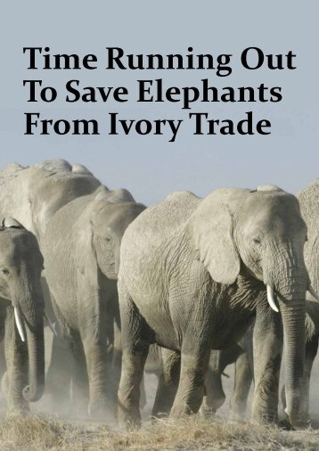 Time Running Out To Save Elephants From Ivory Trade - The East ...