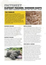 Elephant Poaching Factsheet - African Conservation Foundation