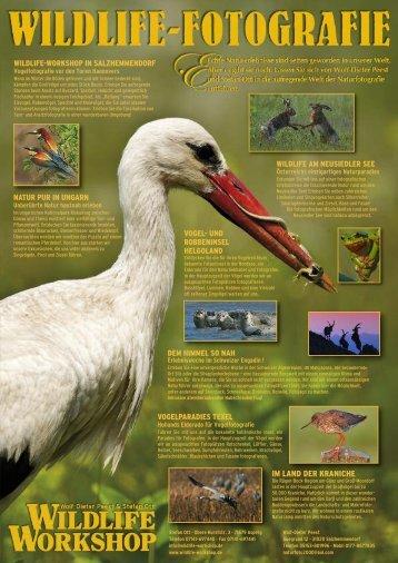 IM LAND DER KRANICHE - Wildlife-Workshop