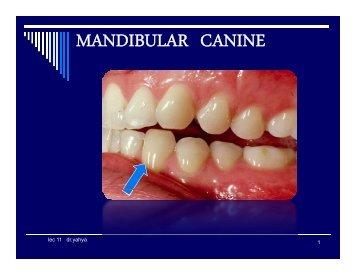 MANDIBULAR CANINE