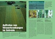 Auftreten von Viruserkrankungen im Getreide
