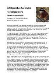 Erfolgreiche Zucht des Rothalssäblers - Vogelzuchtgrabow.de