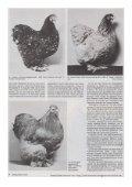 Cochin heute - Brahmazucht.eu - Page 3