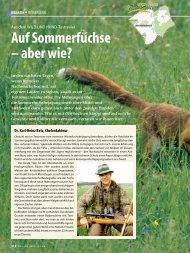 Auf Sommerfüchse – aber wie? - Wild und Hund