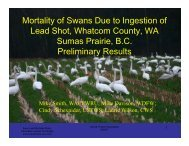 Mortality of Swans Due to Ingestion of Lead Shot, Whatcom County ...