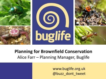 4. Planning for Brownfield Conservation - Buglife