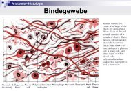 Bindegewebe