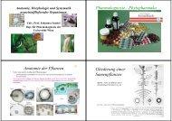 Morphologie, Anatomie und Systematik - 34mb - PharmXplorer