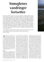 Snøuglenes vandringer fortsetter - Norsk Ornitologisk Forening