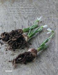Schneeglöckchen -Deko Ideen mit zarten Blüten .PDF - NaturFormen