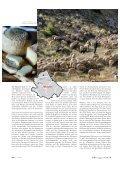TRAVEL - Consorzio di Tutela dei Vini d'Abruzzo - Seite 3