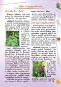 Gyógyító növények - Zöldülj! Fordulj! - Page 5