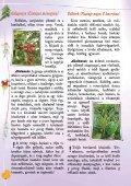 Gyógyító növények - Zöldülj! Fordulj! - Page 6