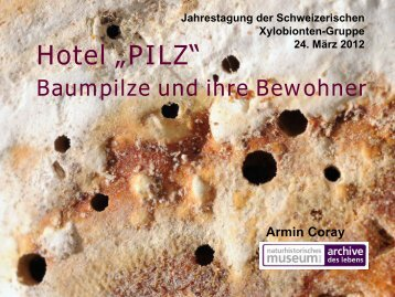 Pilz - Schweizerische Xylobionten Gruppe