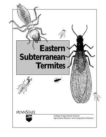 Eastern Subterranean Termites - Accuracy Assured Home ...