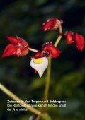 pdf - 1.84 MB - Rainforest Alliance - Page 4