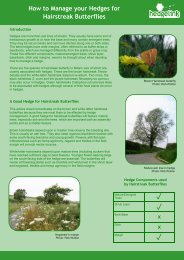 How to Manage your Hedges for Hairstreak Butterflies x x - Hedgelink