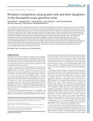 Persistent competition among stem cells and their daughters in the ...