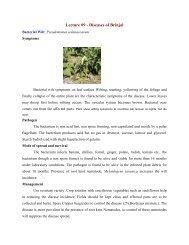 Lecture 09 - Diseases of Brinjal - TNAU