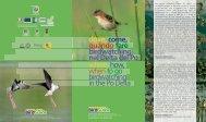 dove,come, quandofare birdwatching nel Delta del Po ... - Delta 2000