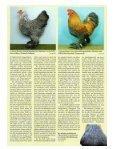Zwerg-Brahma - brahmazucht.eu - Page 2