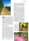 Bienen fördern - Naturschutzbund - Seite 2