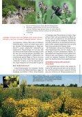 Bienen fördern - Naturschutzbund - Page 3