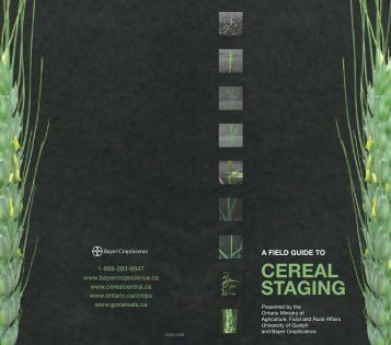 cereal staging - Bayer CropScience
