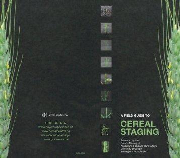 cereal staging - Bayer CropScience
