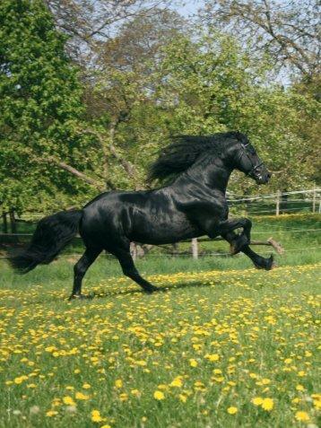 40 | Fallbeispiel in der Pferdepraxis - Pferdeklinik Tillysburg
